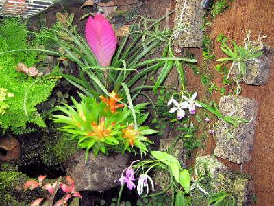 orchideen galerie und bromelien farne im tropenterrarium. Black Bedroom Furniture Sets. Home Design Ideas